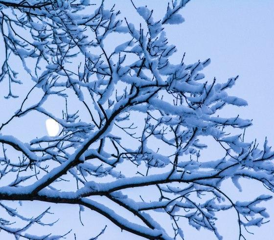snow-0748