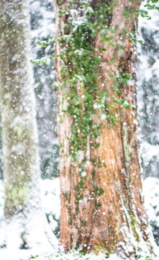 snow-0610