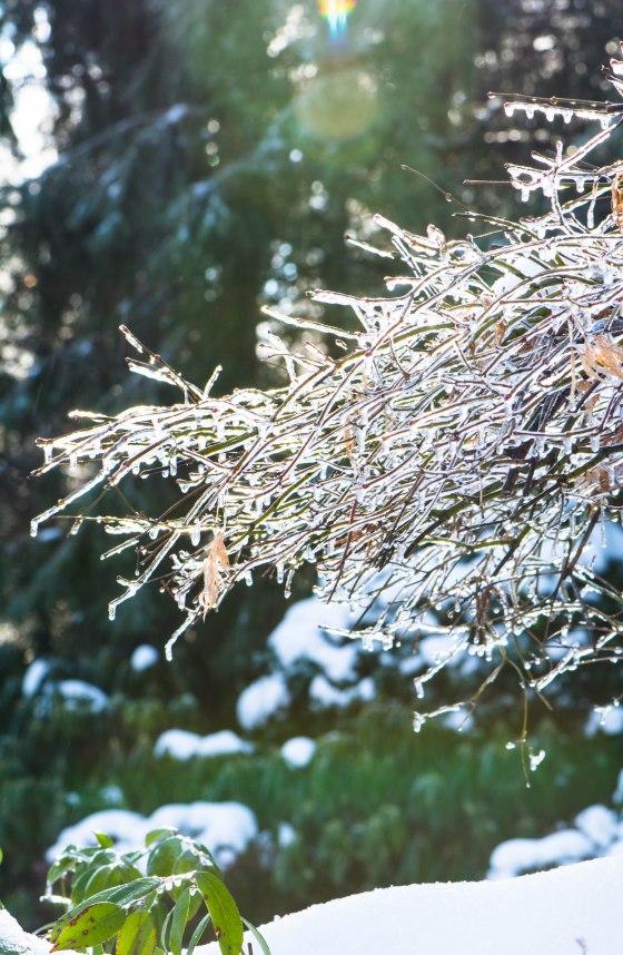 snow-0809